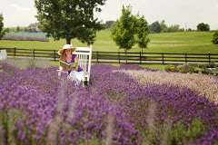 white-oak-lavender-farm